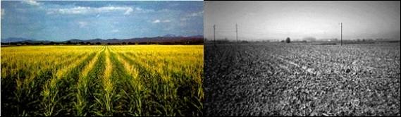 el conflicto de la agricultura 1
