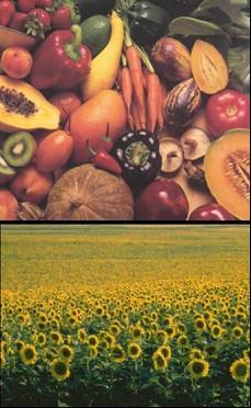 el conflicto de la agricultura 2