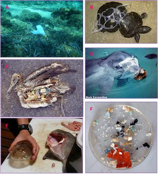 el mar sintético 2