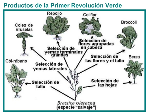 revolución verde 1
