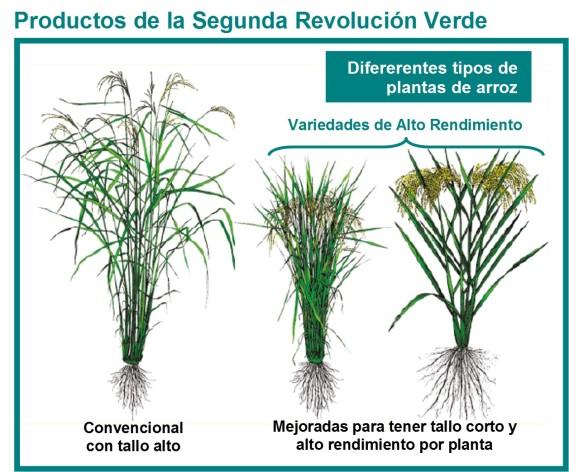 revolución verde 2