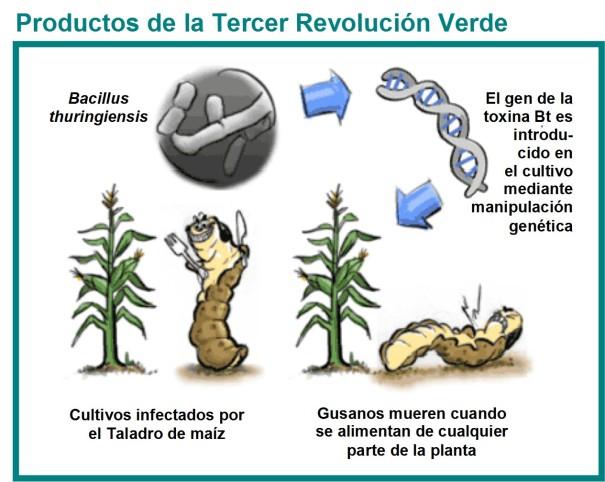 revolución verde 3