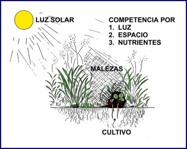 simplificación parte 7